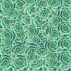 Green multi succulent